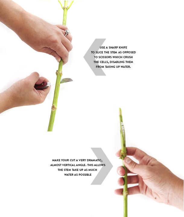 how to cut a hydrangea stem