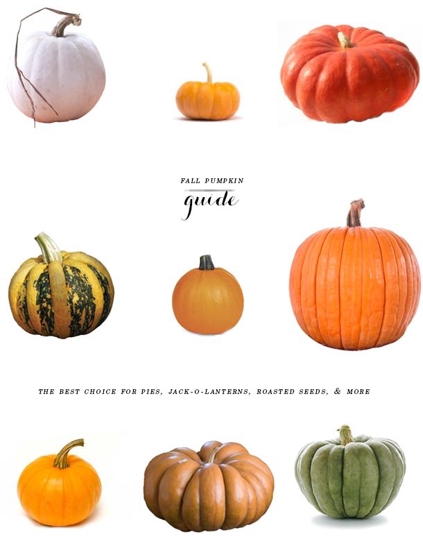pumpkin guide